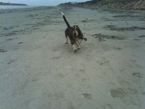 Bouli à la plage