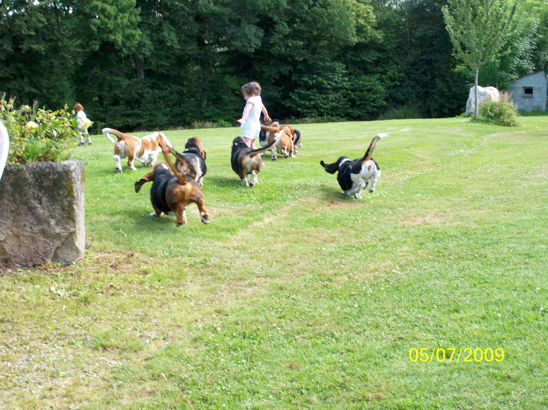 Attention !!! invasion de bassets hound