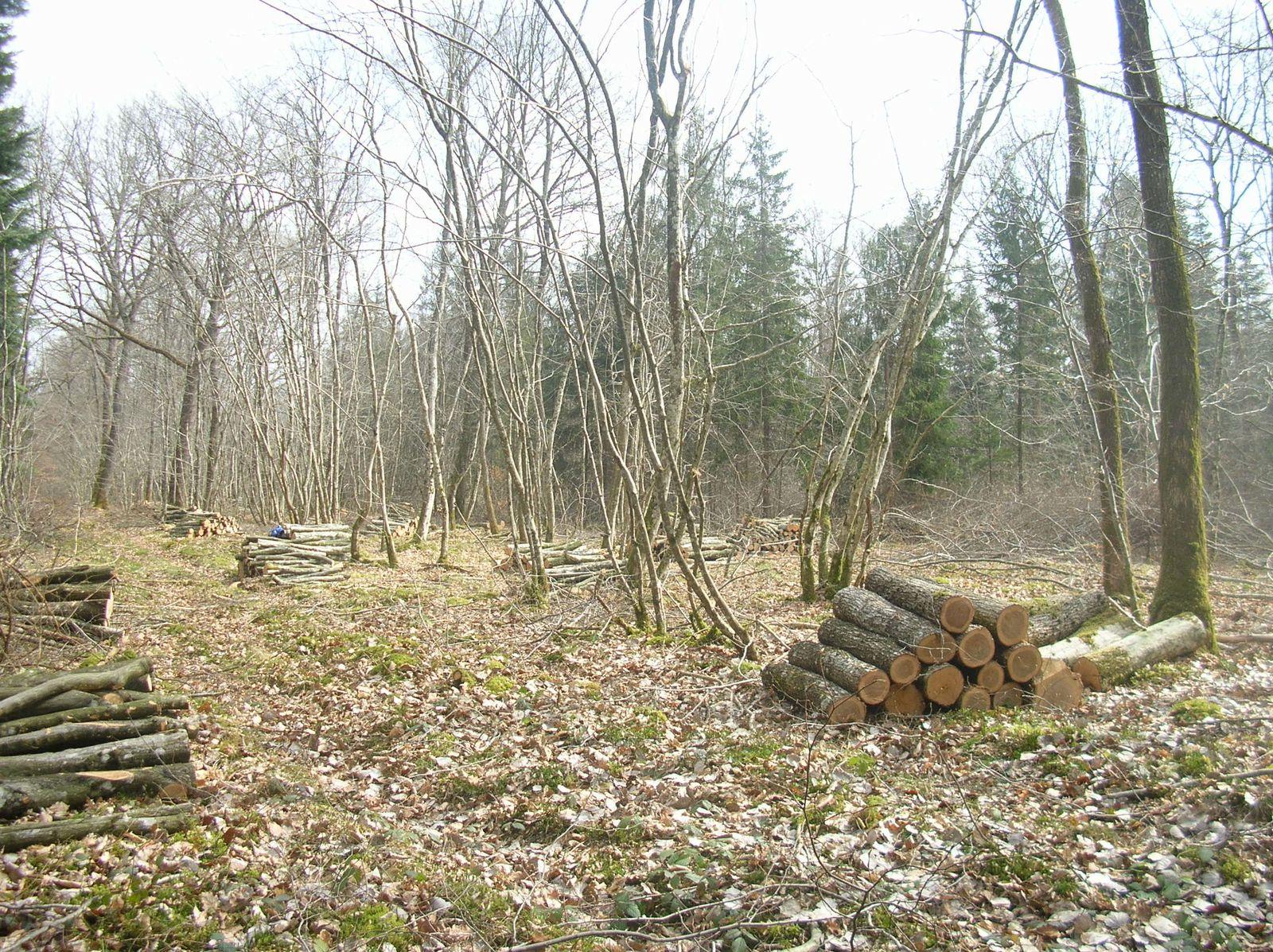 Coupe de notre bois de chauffage Le blog d'un b u00fbcheron # Quand Couper Le Bois De Chauffage
