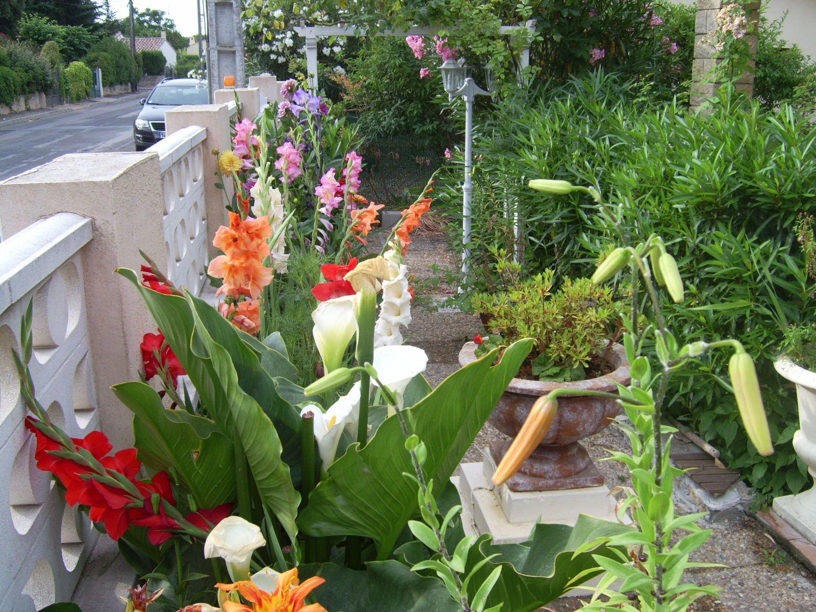 Les fleurs de pierre les glaieuls le blog de buquinp for Le jardin d agathe 19