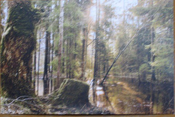 KULAUTUVA-FOREST-from-LAIMA.jpg