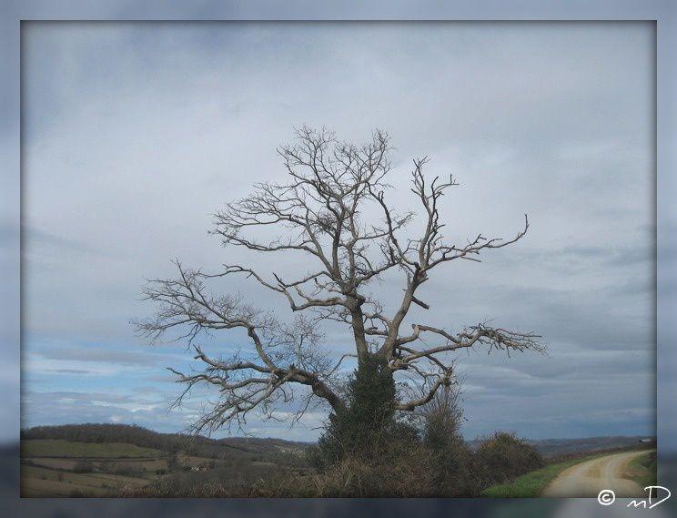 Un arbre en hiver k