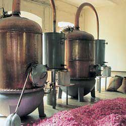 distillation-250.jpg