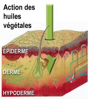 huiles-vegetales.jpg