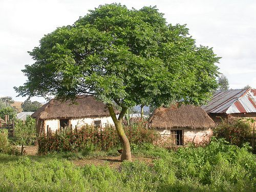 neem-village-copie-1.jpg