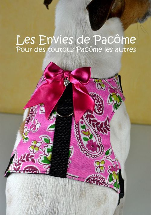 harnais rose pour jack russell