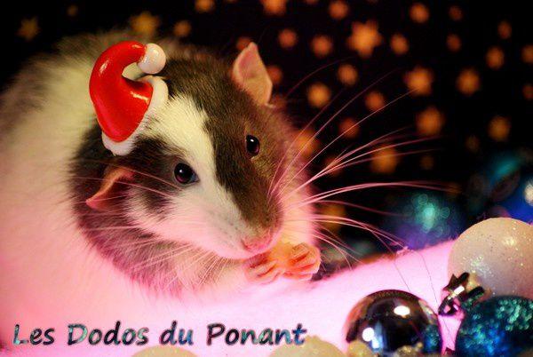 les rats fêtent noel dans leurs dodos douillets (1)