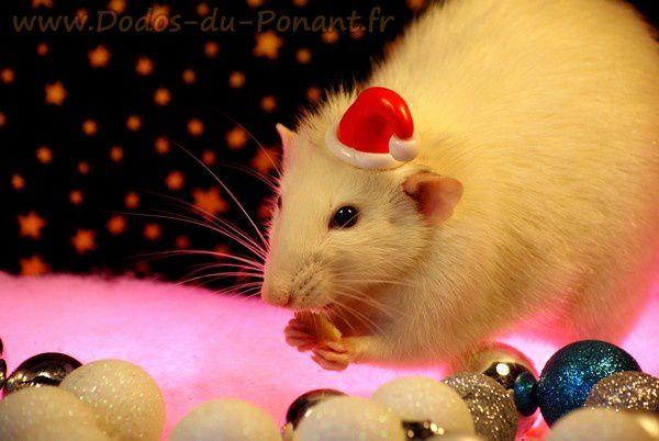 les rats fêtent noel dans leurs dodos douillets (11)