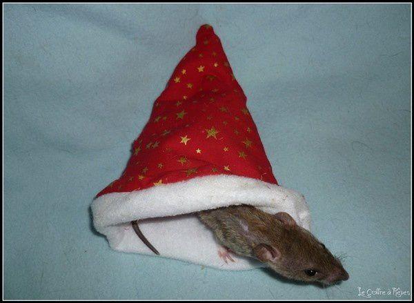 les rats fêtent noel dans leurs dodos douillets (2)