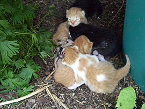 NYCFCIPhoto-FindingKittens05.png