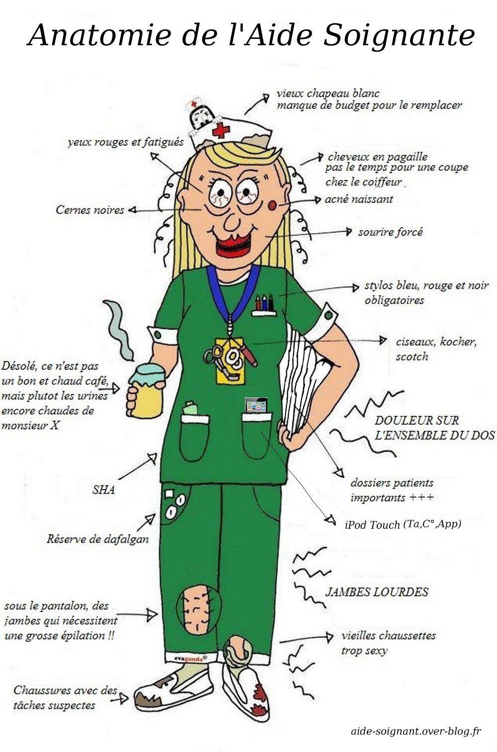 Anatomie De L Aide Soignante Le Blog D Un Aide Soignant