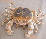 CRABE150.jpg