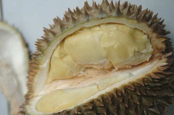 Compartiments renfermant les quartiers de durian