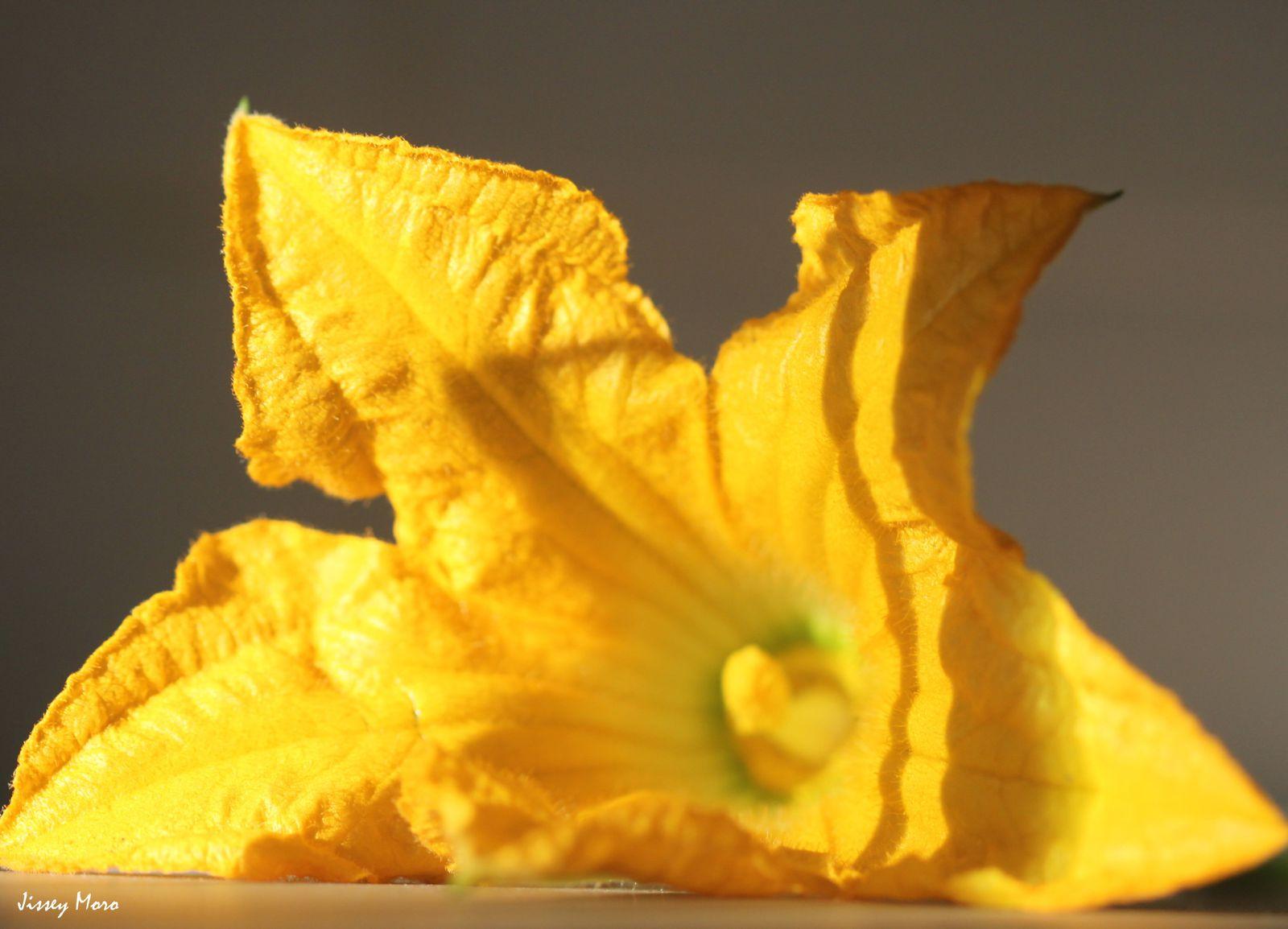 fleurs-en-vrac-5849.JPG