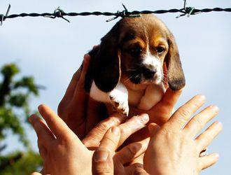 beagle-g_1.jpg