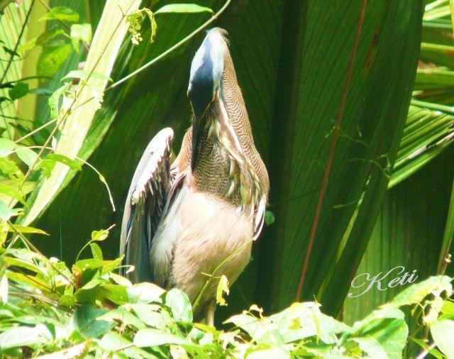 Costa Rica44