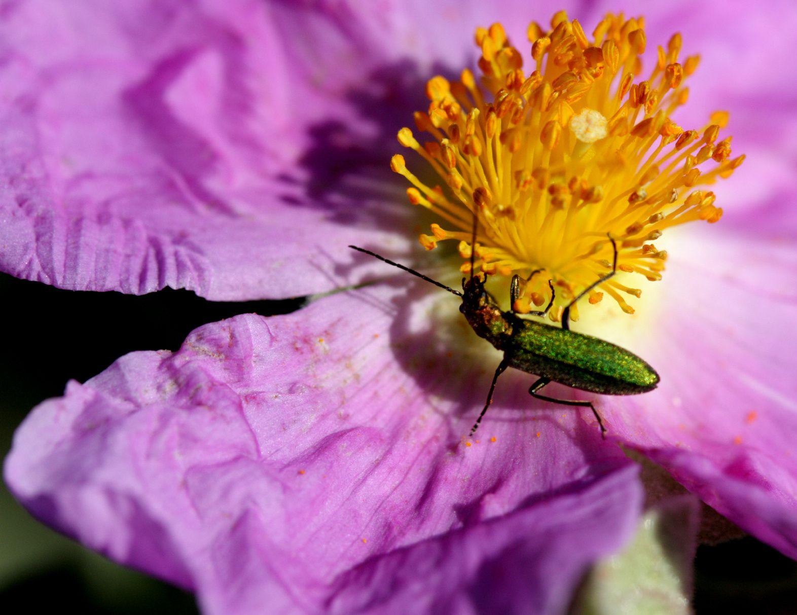 Photos diverses : Faunes Flores Nature.