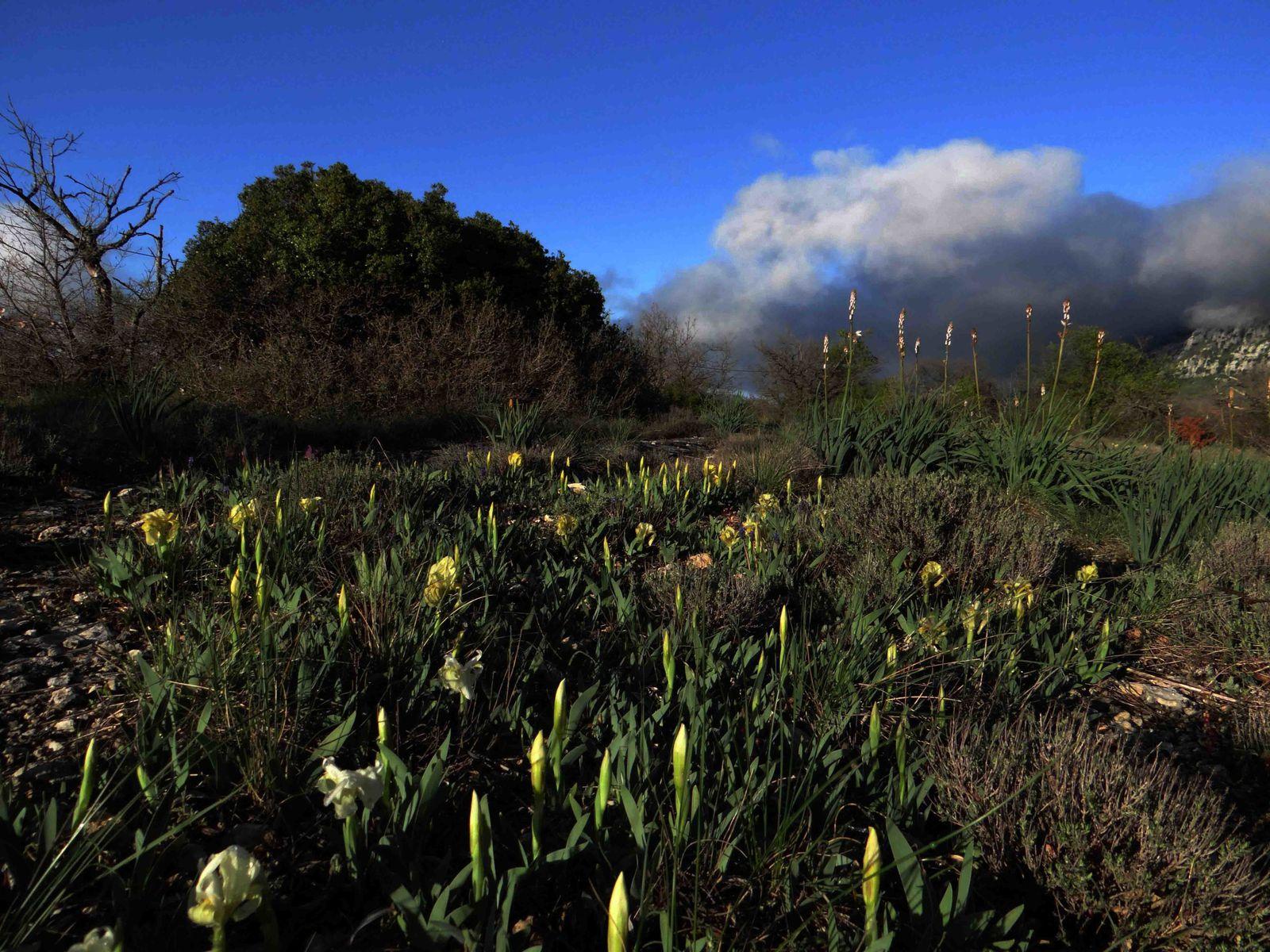 Faunes et Flores Sainte Baume