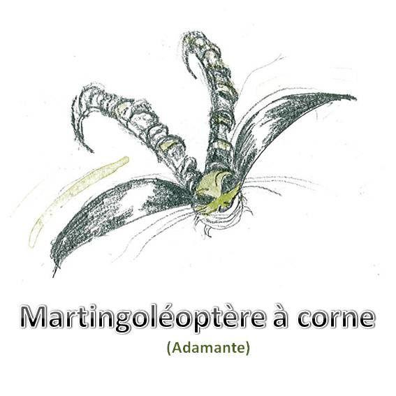 martingoleoptere