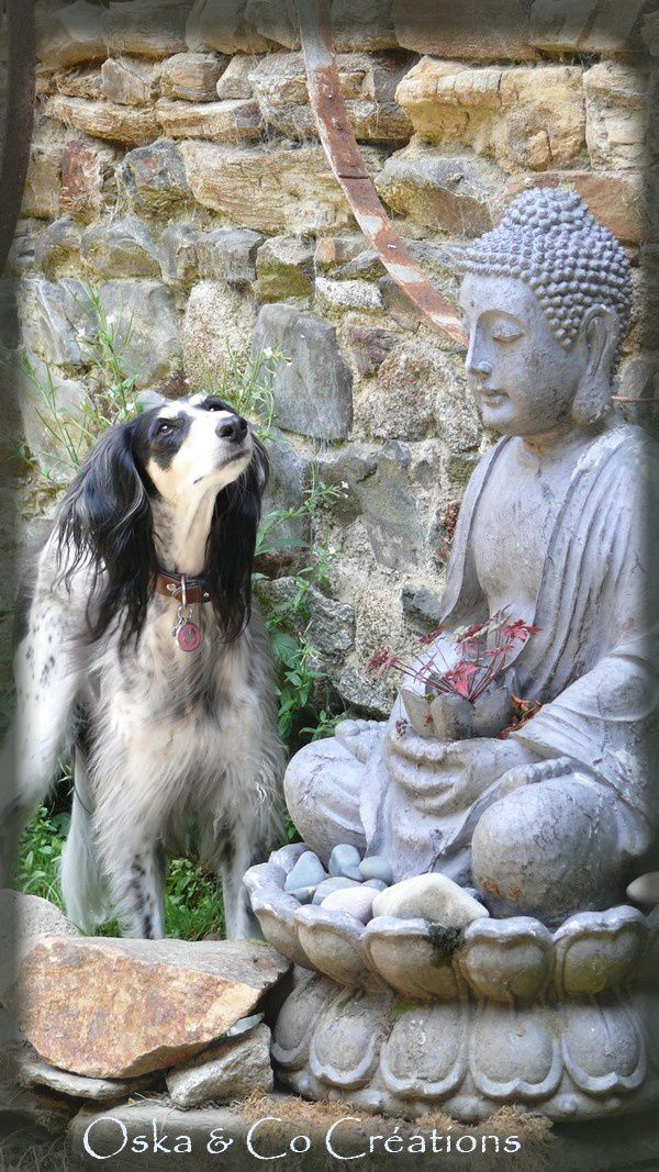 Saluki et Bouddha Oska & Co Créations