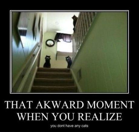 cat_scary.jpg