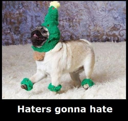 haters_gonna_hate_pug.jpg