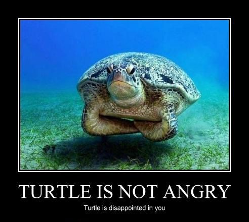 turtle_is_not_angry.jpg