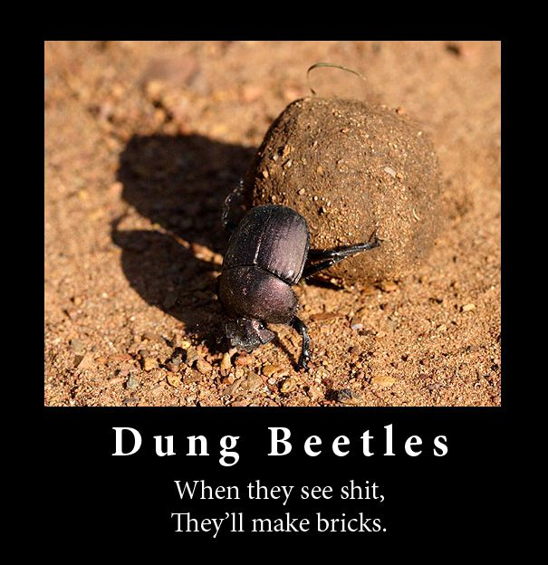 dung_beetles.jpg