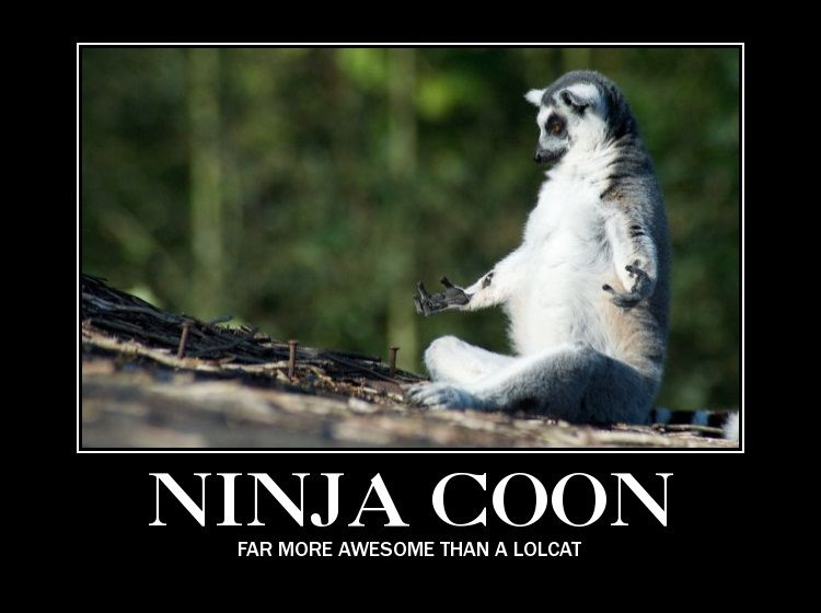 ninja_coon.jpg