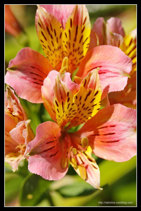 Série fleurs , Connaissez,vous leur nom ?