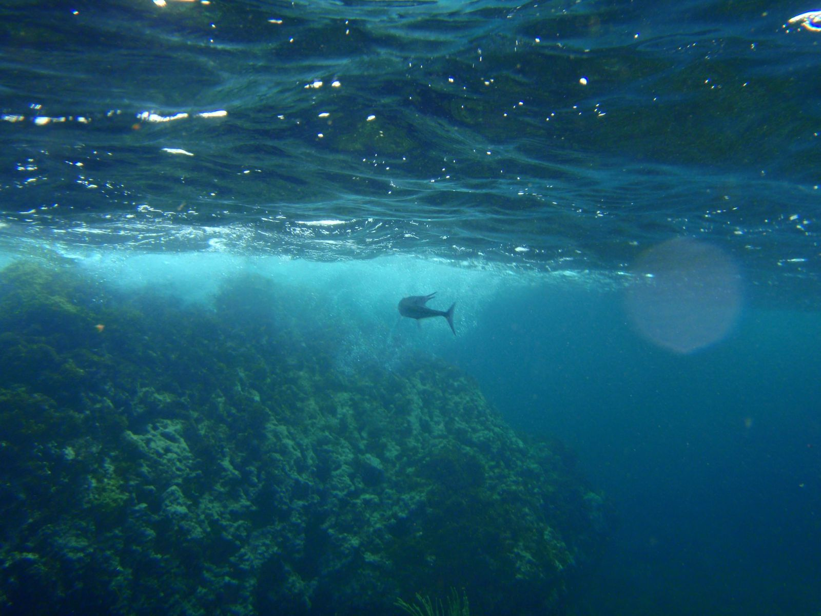 fonds-sous-marin-anse-d-arlet