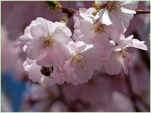 Le nez dans les fleurs (3)