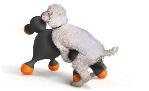 amour-chiens