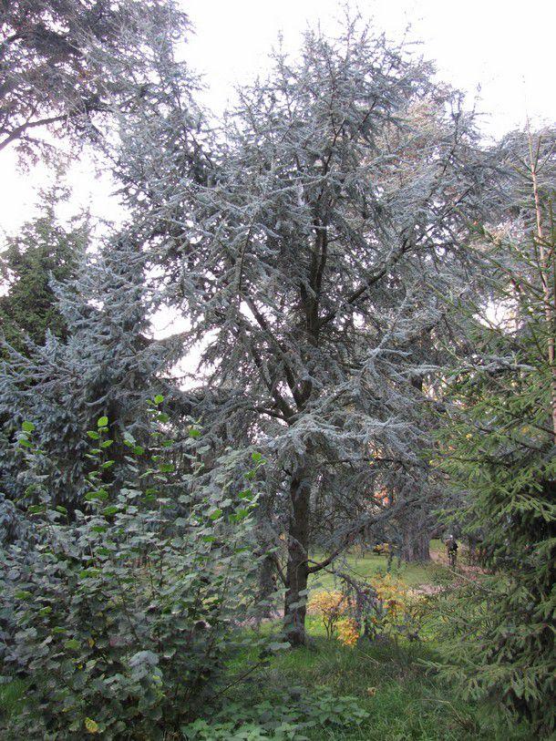La 39 for t bleue 39 2 2 du jardin albert kahn boulogne - Mobilier jardin hiver boulogne billancourt ...