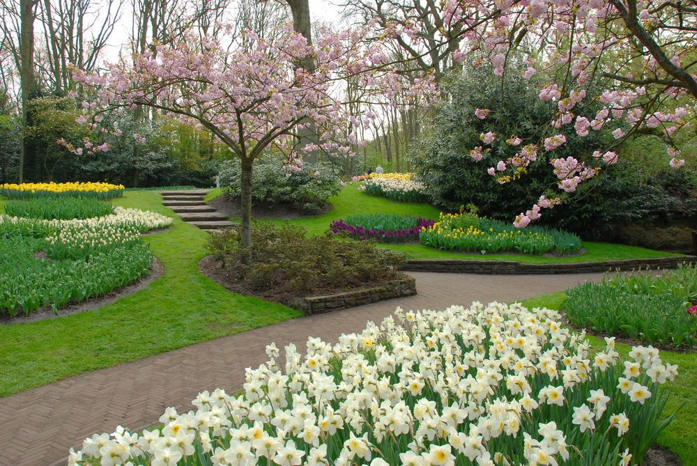 Keukenhof pay bas plus grand jardin des tulipes en for Le jardin keukenhof