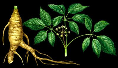 ginseng-copie-1.jpg