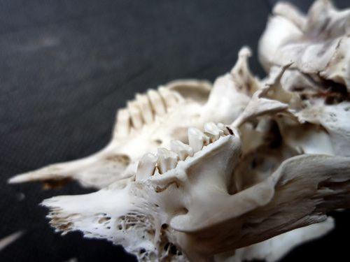 monsta-skull-02