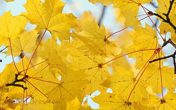 feuilles-jaunes02