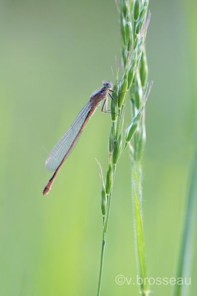 agrion2012-1