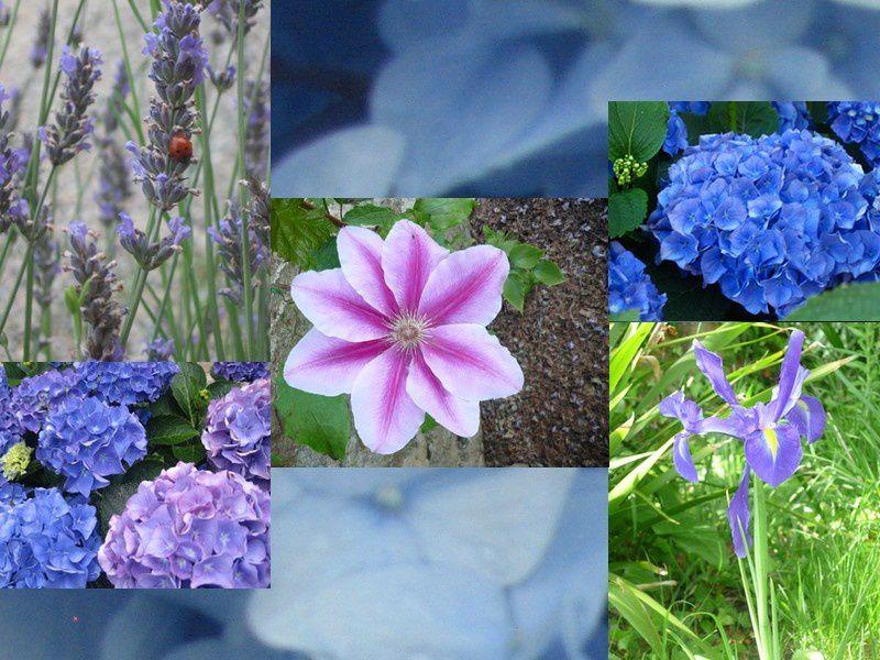 fleurs bleues a l 39 ouest chambres d h tes ferme de kerscuntec. Black Bedroom Furniture Sets. Home Design Ideas