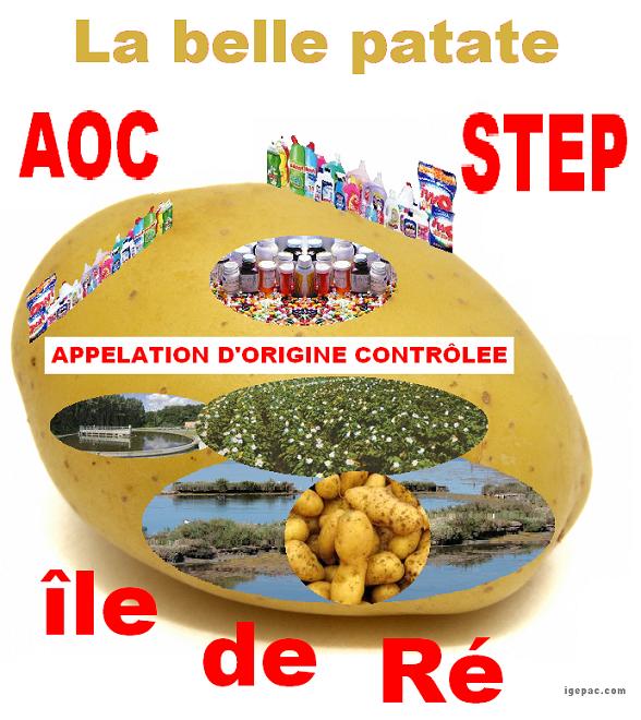 Patate-aoc-ré-3