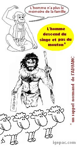 singe-homme-mouton.PNG