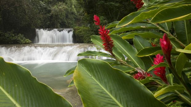 YS-Falls-and-Red-Ginger-Jamaica.jpg