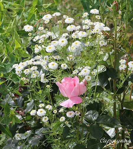 Jardin-de-juillet 6264