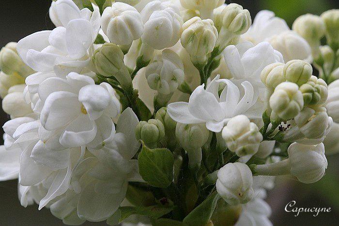 blanc 3409