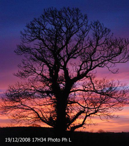 coucher-arbre-34.jpg