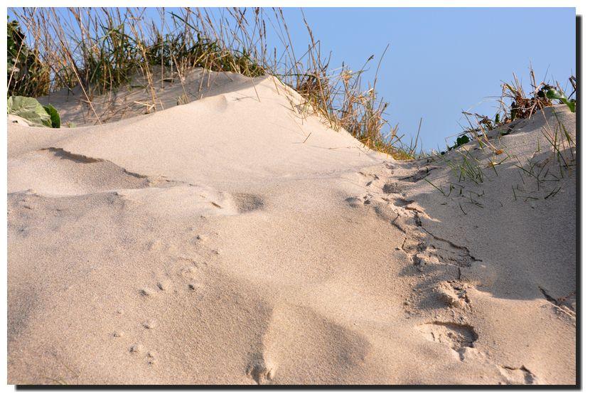 L'évolution du cordon dunaire et de la plage de La Sambière vers Montfarville.