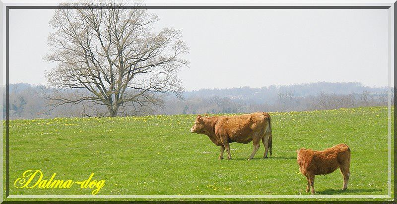 paysages-limousin--2-.JPG