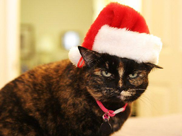 Chat Noël 47