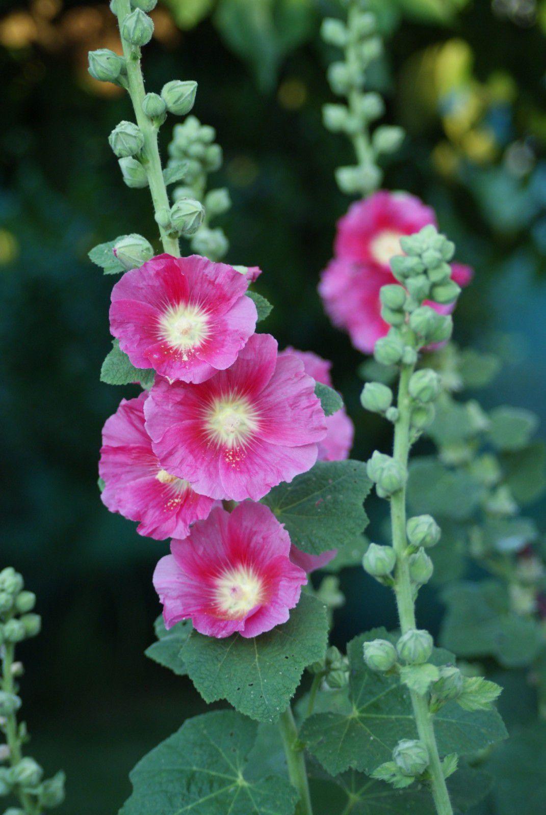 Album - Fleurs et jardins